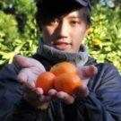 井上信太郎(善兵衛農園7代目)はイケメンみかん王子!?越冬紅の通販は?【マツコの知らない世界】